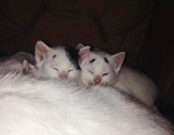 gary-kitten-tiny