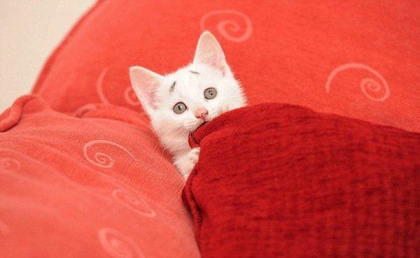 gary-kitten-two