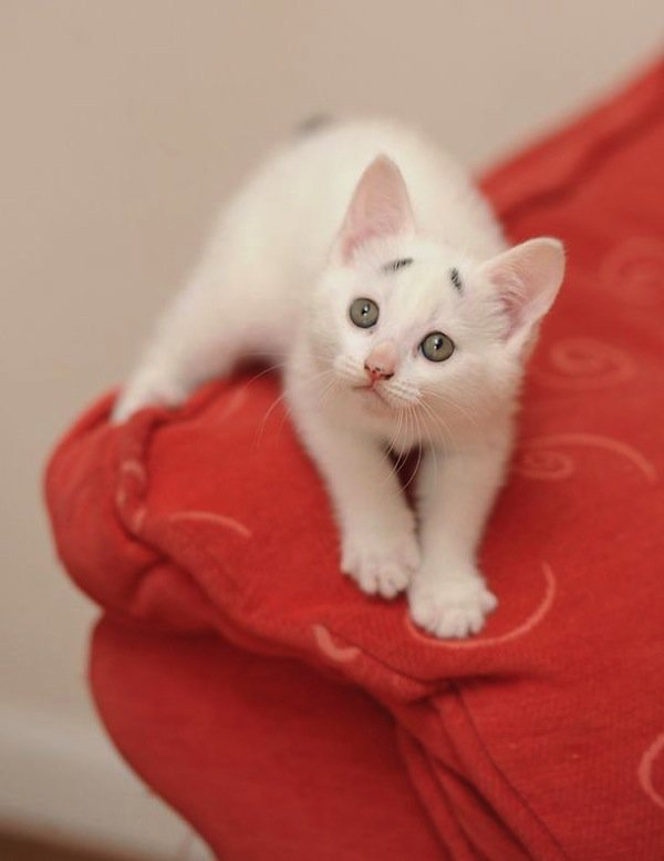 gary-kitten-worried