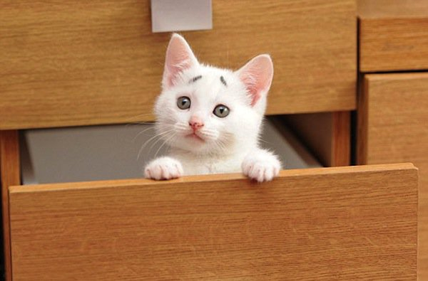 gary-kitten