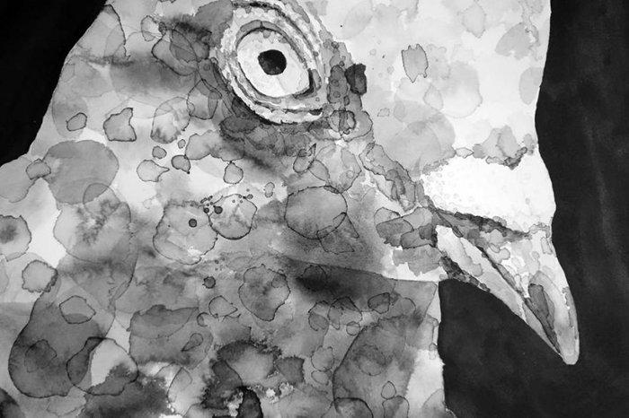 gawie-joubert-pigeons-face