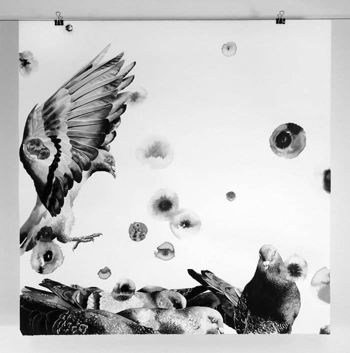 gawie-joubert-pigeons-land
