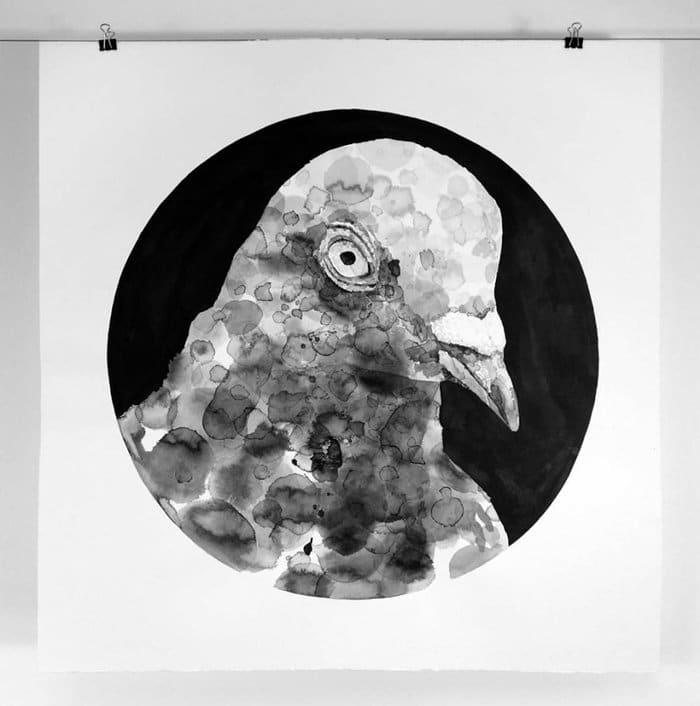 gawie-joubert-pigeons-round