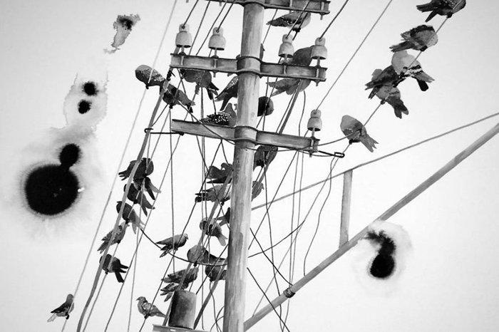 gawie-joubert-pigeons-wire