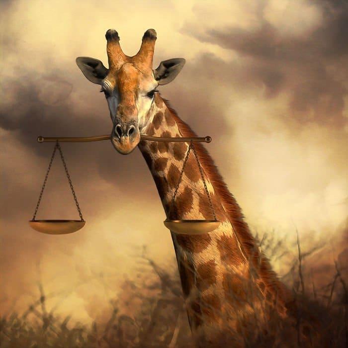 giraffe scales