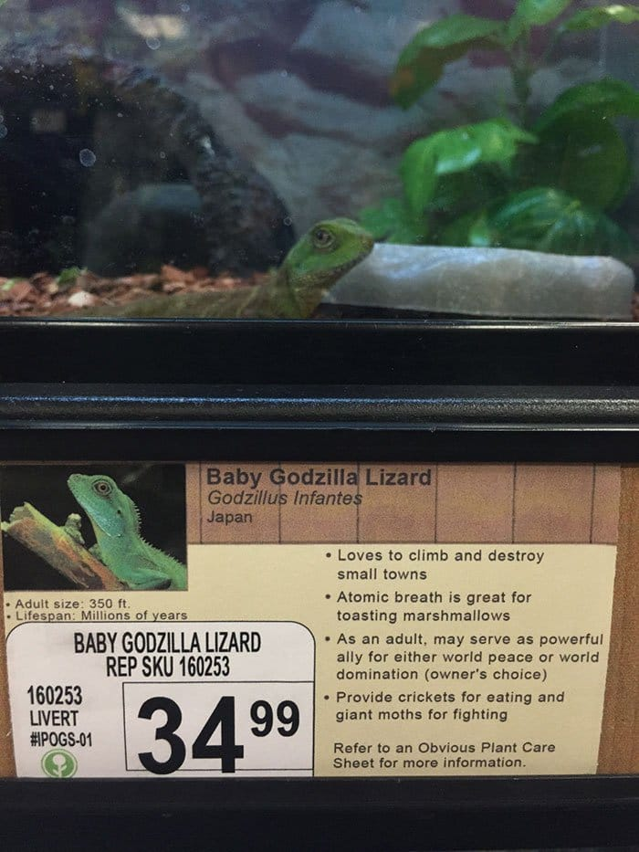 godzilla lizard info