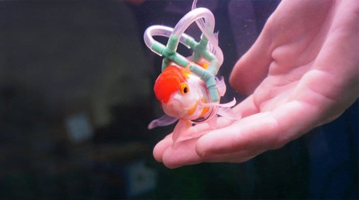 goldfish wheelchair hand