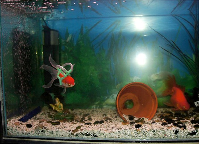 goldfish wheelchair tank pot