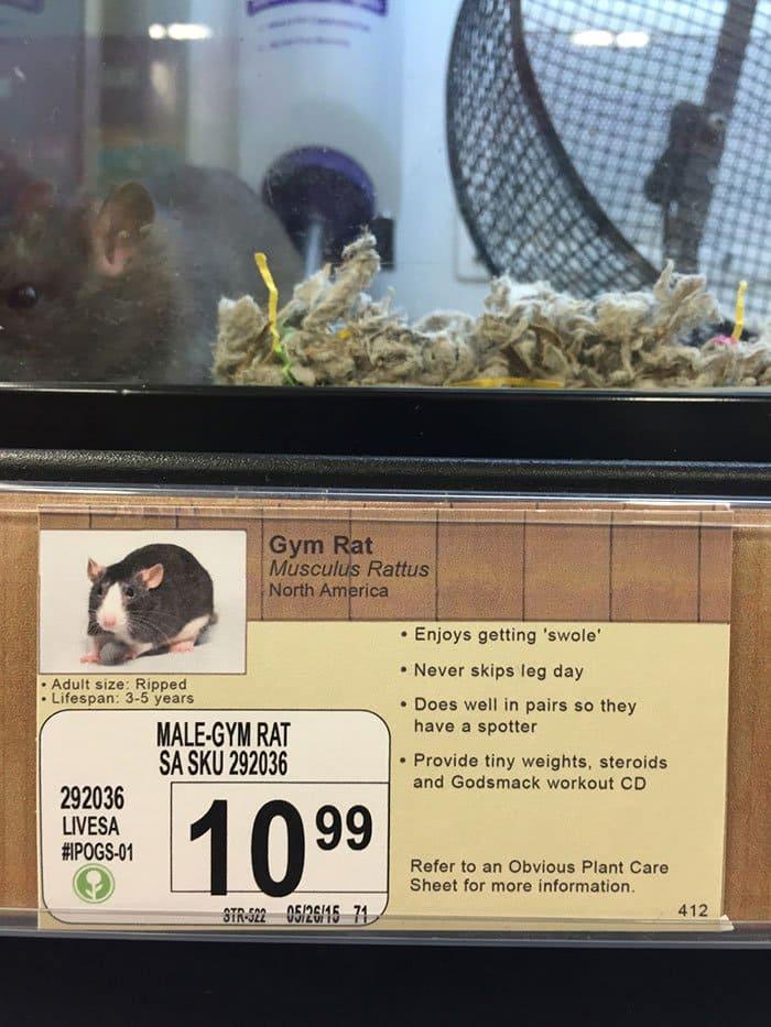 gym rat info