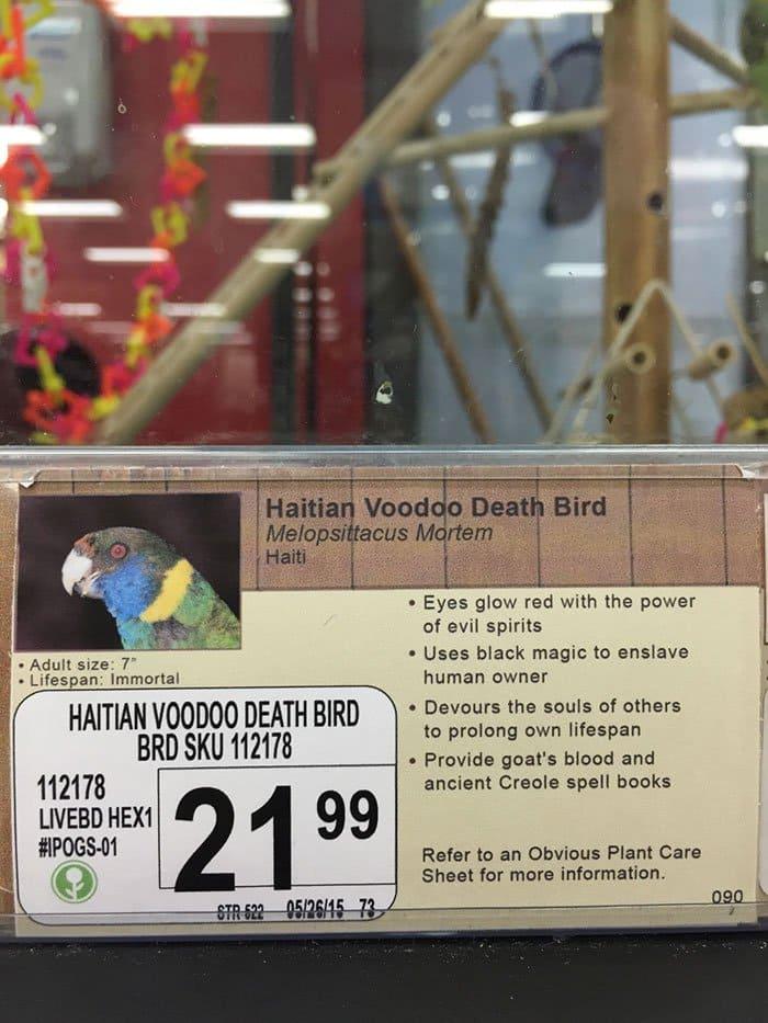 haitian voodoo bird info