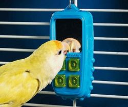 interactive bird toy