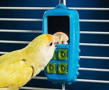 interactive bird toy