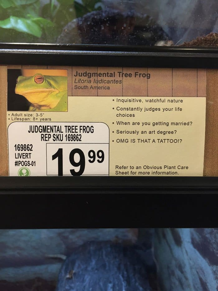 judgmental frog info