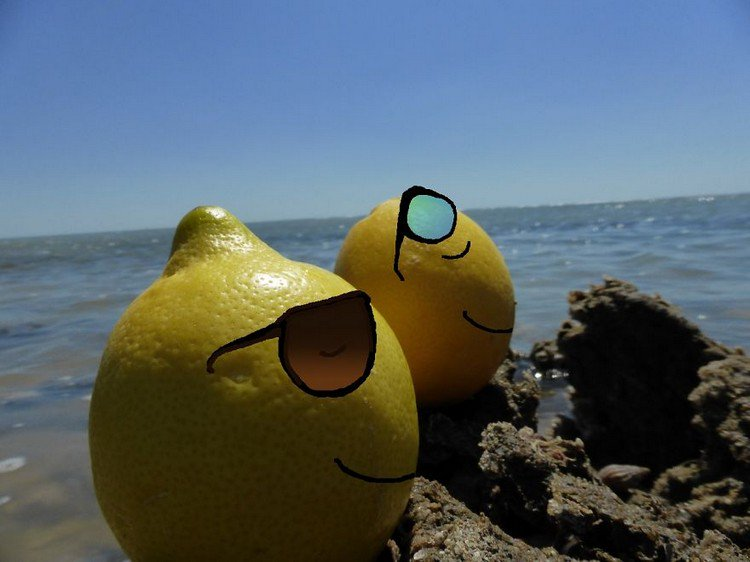 lemons sunbathing sea