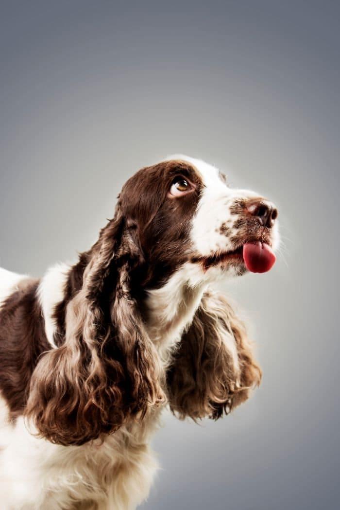 lick-dog-ultra