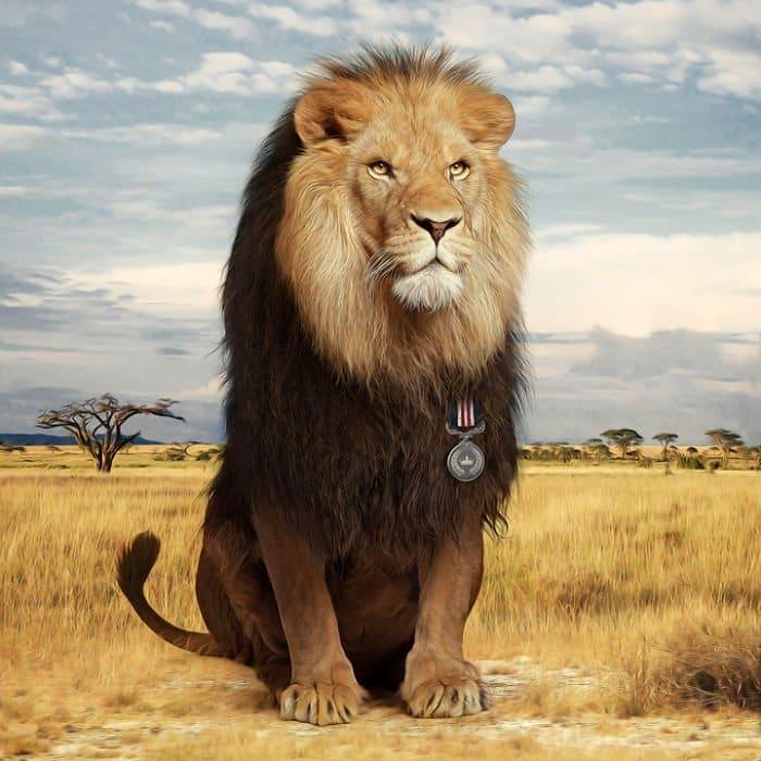 lion medal