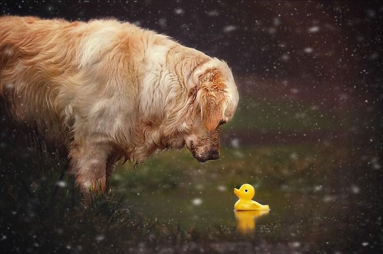 mali duck pond