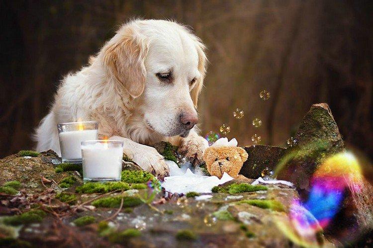 mali teddy bath candles