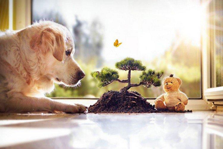 mali teddy bonsai