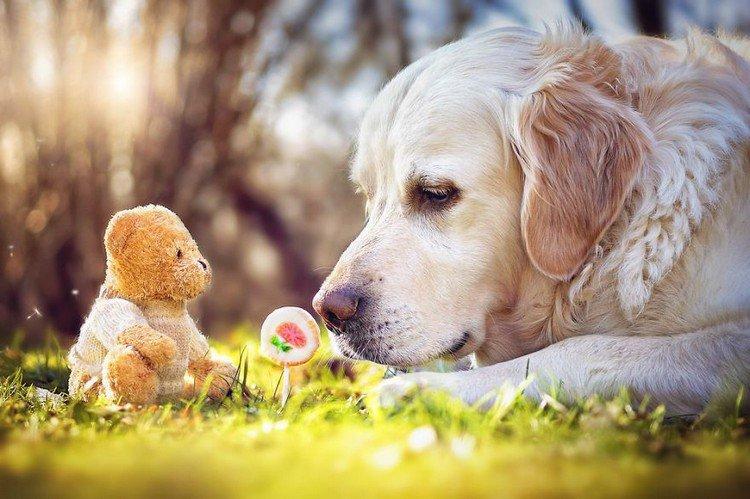 mali teddy flower candy