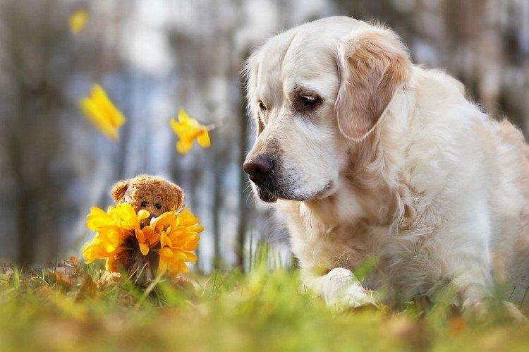 mali teddy flowers