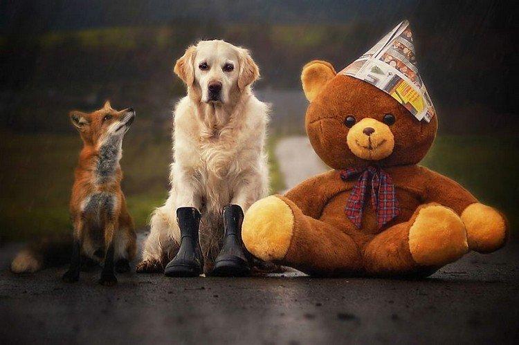 mali teddy fox rain