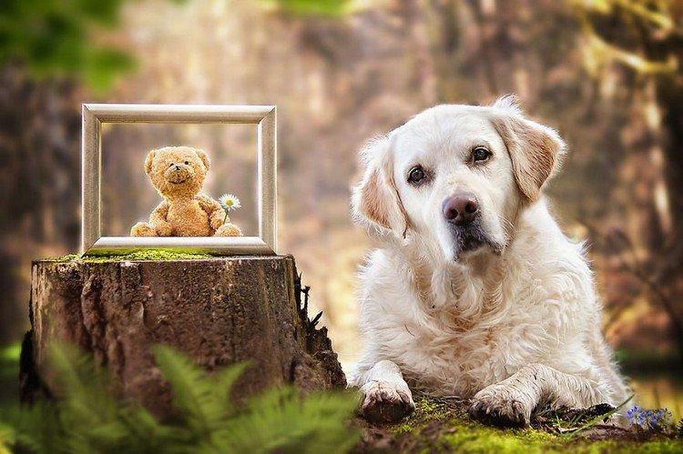 mali teddy frame