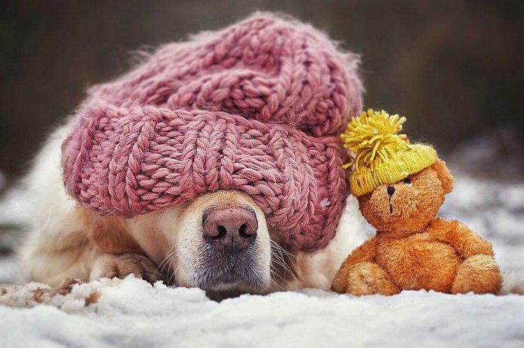 mali teddy hats