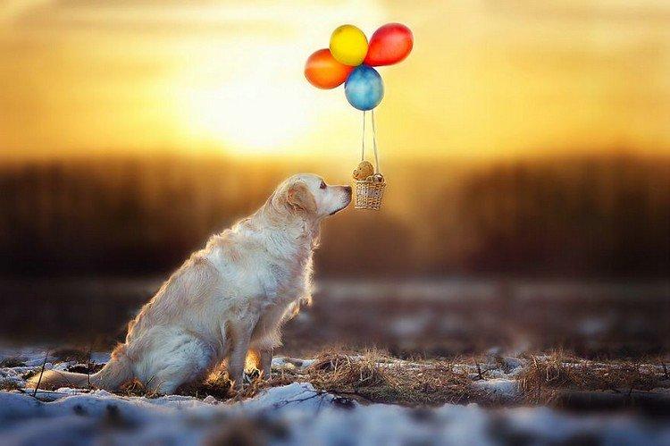 mali teddy hot air balloon