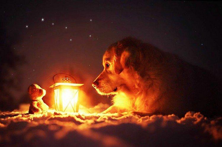mali teddy lantern