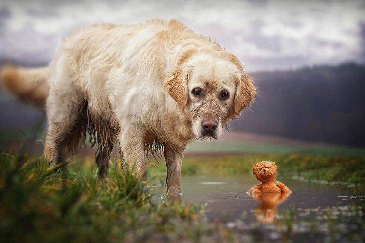 mali teddy muddy water