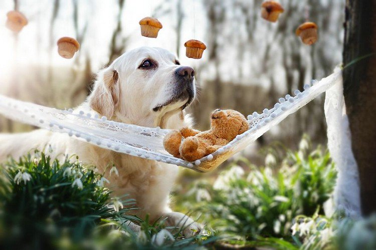 mali teddy muffins