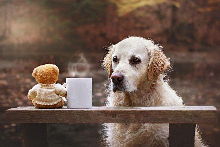 mali teddy mug