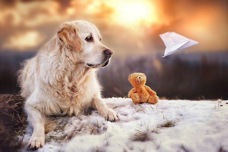 mali teddy paper airplane