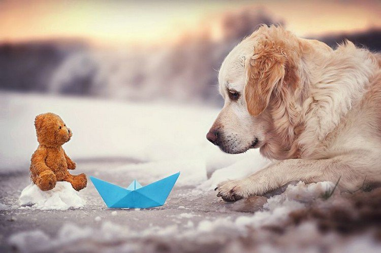 mali teddy paper boat