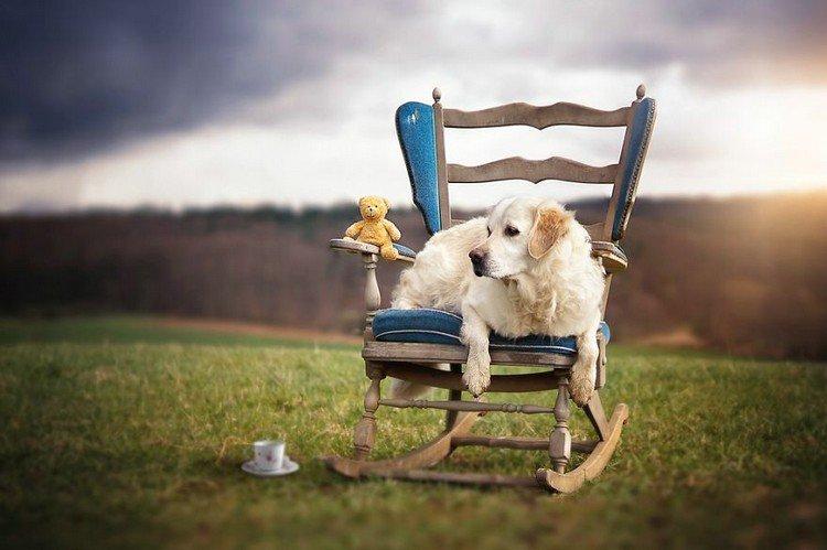 mali teddy rocking chair