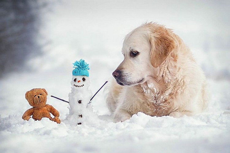 mali teddy snowman