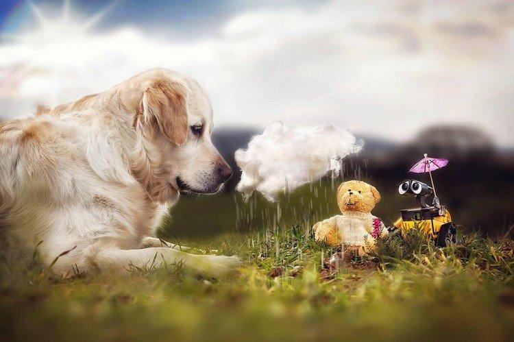 mali teddy wall e cloud
