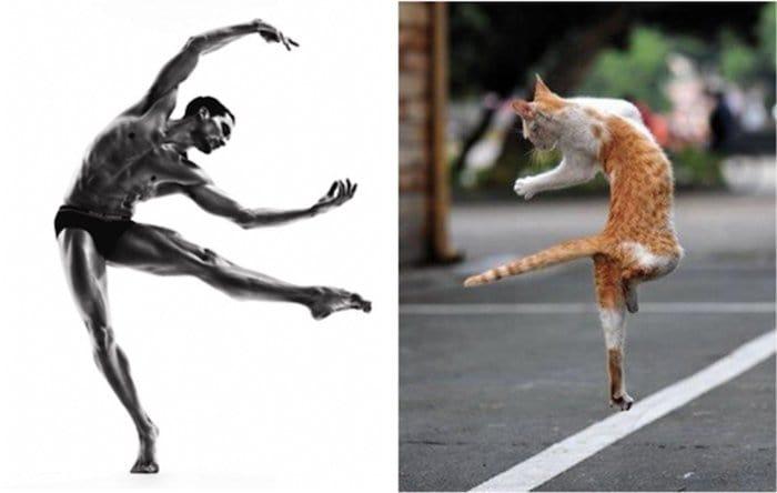 men-and-kittens-ballet