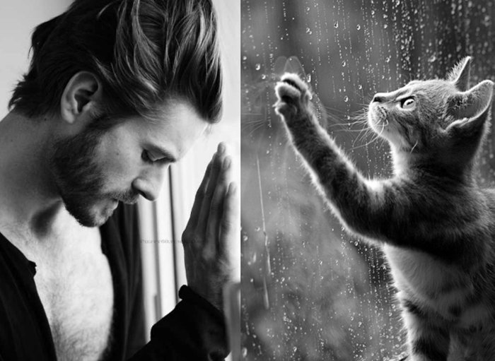 men-and-kittens-rain