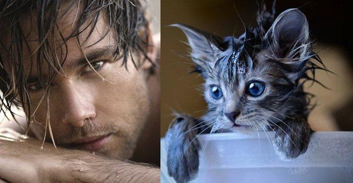 men-and-kittens-wet
