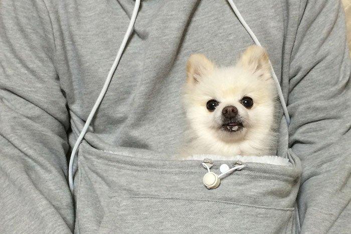 mew-garoo-dog