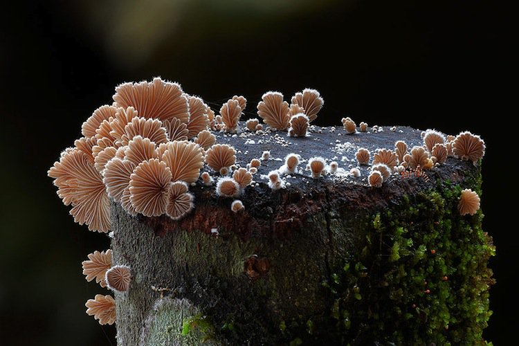 mushroom-beige