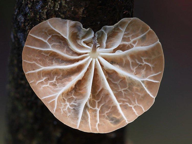mushroom-big
