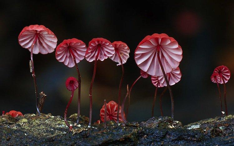 mushroom-dancing