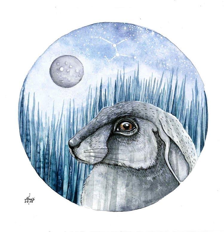 nora-illustration-hare