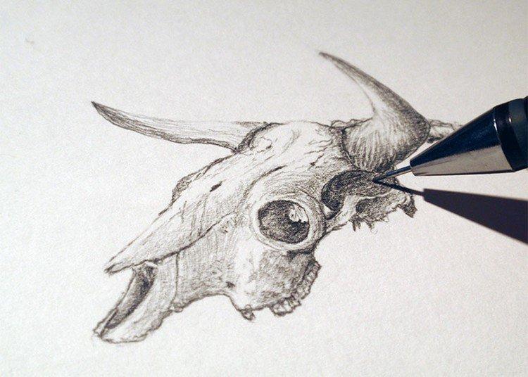 ophiotauros bull skull