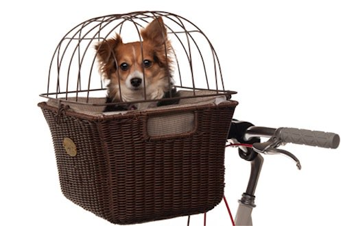 dog sitting in basket mounted to bicycle