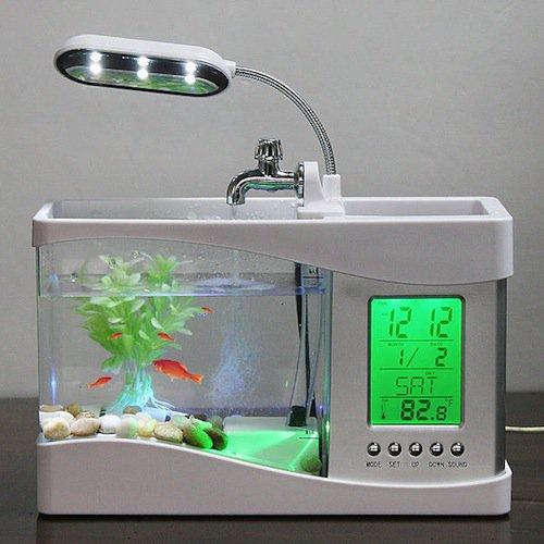 pets-fish