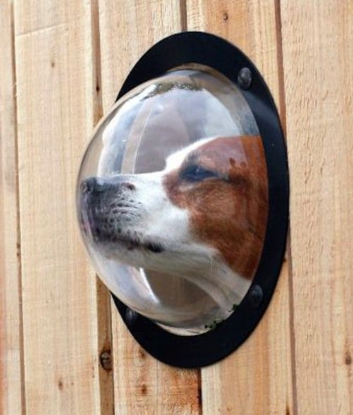 dog looking through porthole built in fence